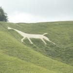 naja, ein weißes Pferd eben
